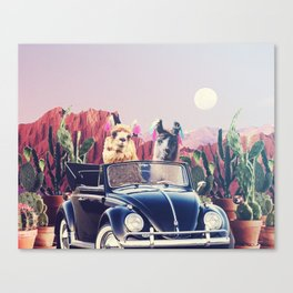 Llamas on the road Canvas Print