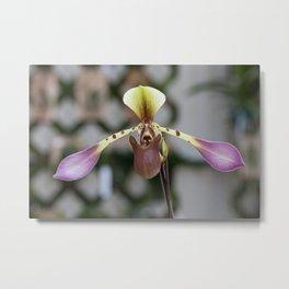 orchids 16.6 Metal Print
