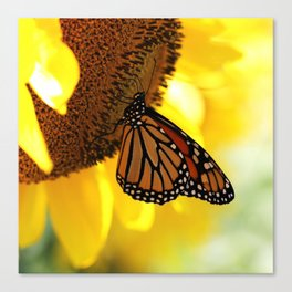 Monarch Sunflower Canvas Print
