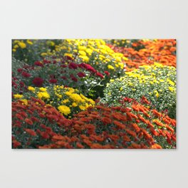 Chrysthemum Flowers Variety Canvas Print
