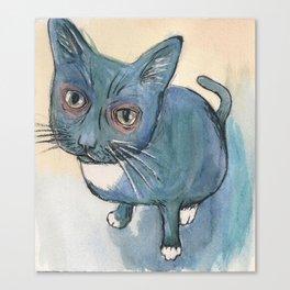 Blu Cat Canvas Print