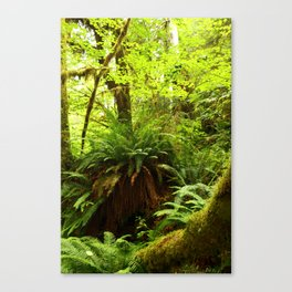 Rainforest Ferns Canvas Print