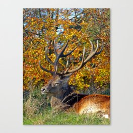 Red Deer Resting Canvas Print
