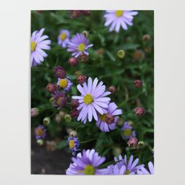 Light Purple Flowers Poster