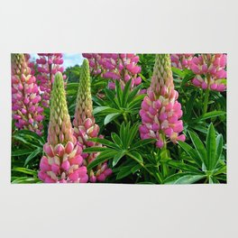 Rose Lupins in the Garden Rug