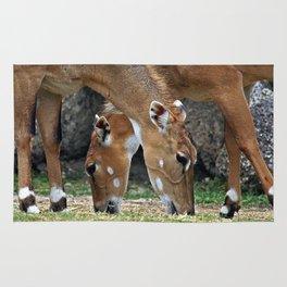 Persian Gazelle Rug