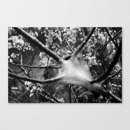 Apple Silk Canvas Print