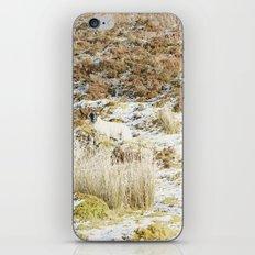 Under the Winter's Sun iPhone & iPod Skin