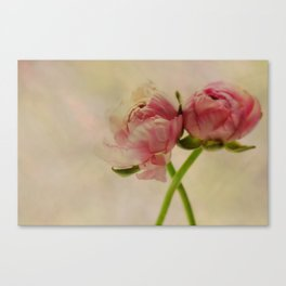 Falling in Love with rose flowers Canvas Print