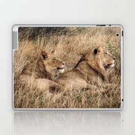 Camouflaged African Male Lions of the Kalahari Desert Laptop & iPad Skin