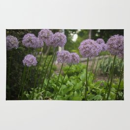 Purple Allium Ornamental Onion Flowers Blooming in a Spring Garden 3 Rug