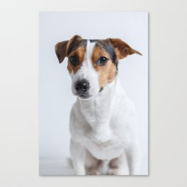 sweet little puppy dog Jack Russel Canvas Print