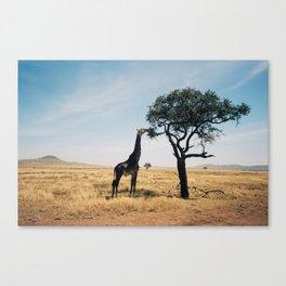 Lone giraffe Canvas Print