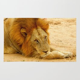Lion's Eyes Rug