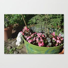 Sun kissed Garden Angel and Begonias Canvas Print