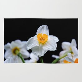 Daffodils4 Rug
