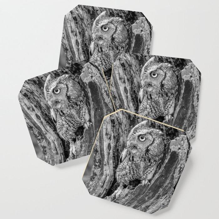 Echo the Screech Owl by Teresa Thompson Coaster