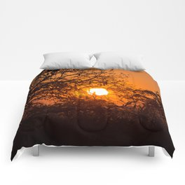 Sultry sun setting behind the sausage tree Comforters