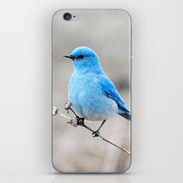Mountain Bluebird on the Tansy iPhone Skin