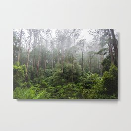 Forest and Fog Metal Print