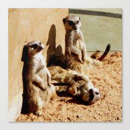 Meerkat Togetherness Canvas Print