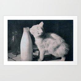 cat's milk Art Print