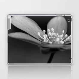 Blue spring flower Hepatica in bw III Laptop & iPad Skin