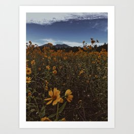 Wildflowers Forever Art Print