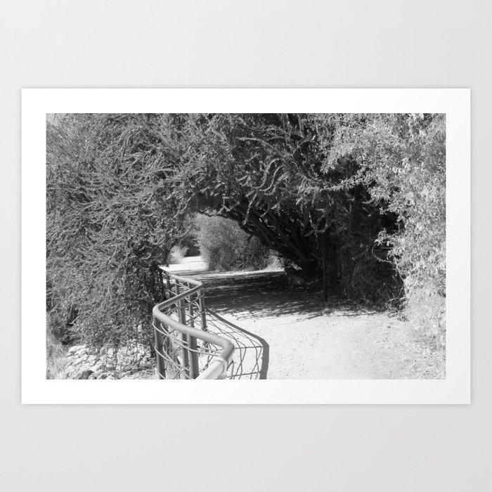 Boyce Thompson Arboretum Black and White No.14 Art Print