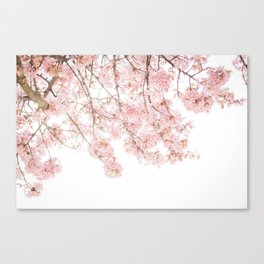 Pink Blooming Cherry Trees Canvas Print