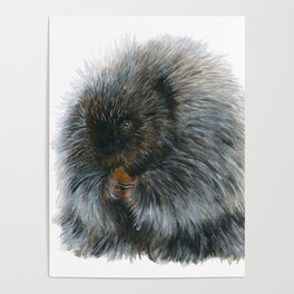 Vinnie the Porcupine by Teresa Thompson Poster