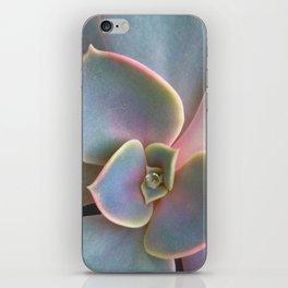 Succulent Dew Drop iPhone Skin