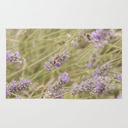 A bee on the lavender #2 Rug