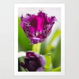 Tulip Lace Art Print