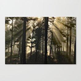 Woodland Sunrise Canvas Print