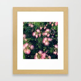 Mimosa Tree Floral Pattern | Photography | Tropical | Pink aesthetic Framed Art Print
