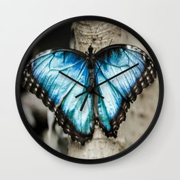 Black And White Blue Morph Butterfly Wall Clock