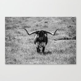 Why The Long Horns? Canvas Print