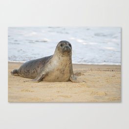 Seal Pup - Dudley Canvas Print