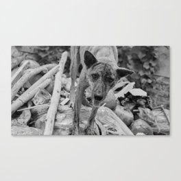 Bali Dog Canvas Print
