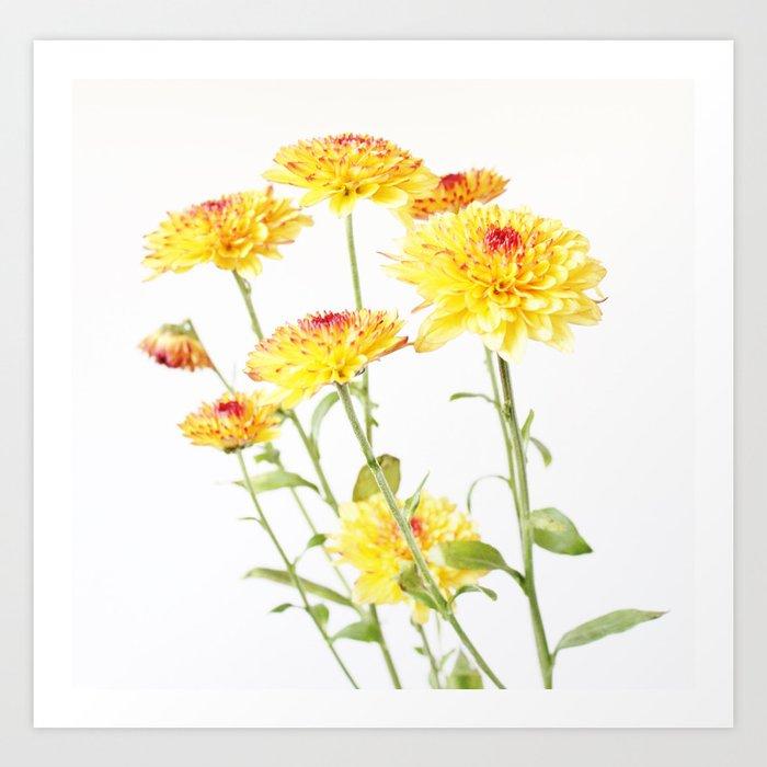 Chrysanthemums for mum Art Print