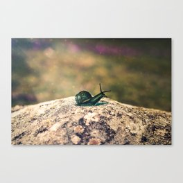 Slow Dream Canvas Print