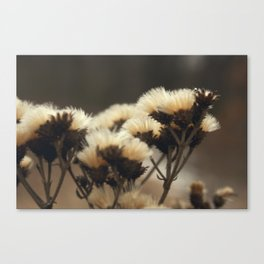 Taupe Canvas Print
