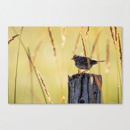 Savannah Sparrow and Sunrise Canvas Print