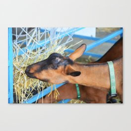 Portrait Of A Goat 2 Canvas Print