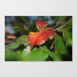 Speckles Canvas Print