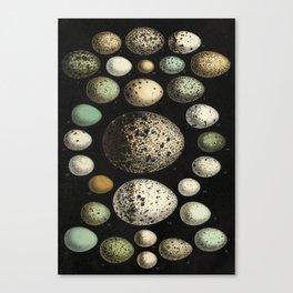 Naturalist Eggs Canvas Print