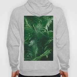 Macro photography of a fern in a tropical forest. Nature background. Hoody