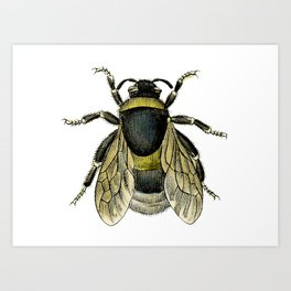 Vintage Bee Illustration Art Print