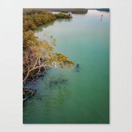 Dolphin Patrolling Mangroves Canvas Print